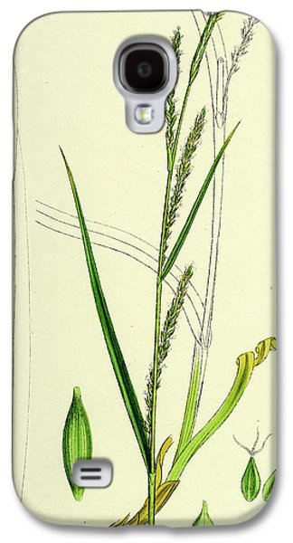 Carex Strigosa Loose-spiked Wood Sedge Galaxy S4 Case