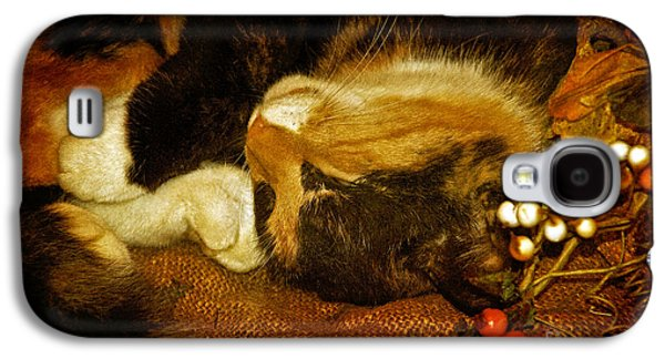 Cat Catnapping Galaxy S4 Case by Lois Bryan