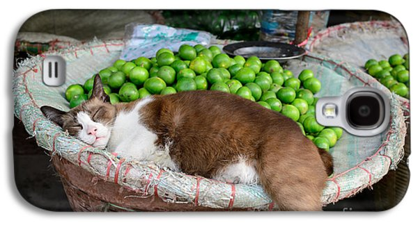 Cat Sleeping Among The Limes Galaxy S4 Case by Dean Harte