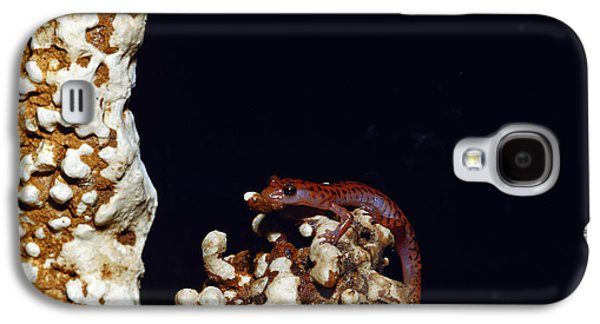 Cave Salamander Galaxy S4 Case by Charles E. Mohr