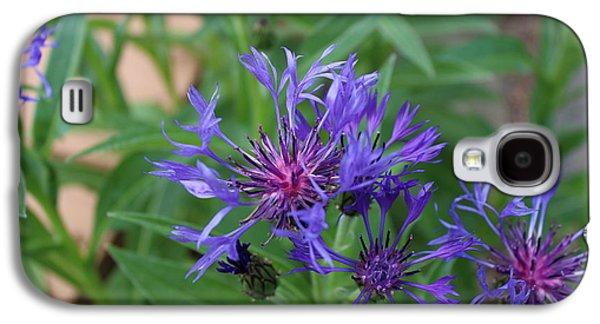 Centaurea Montana Galaxy S4 Case by Brian Lucia