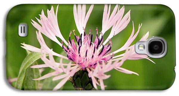 Centaurea Montana 'rosea' Galaxy S4 Case by Adrian Thomas