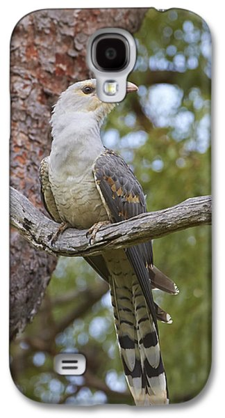 Channel-billed Cuckoo Fledgling Galaxy S4 Case by Martin Willis