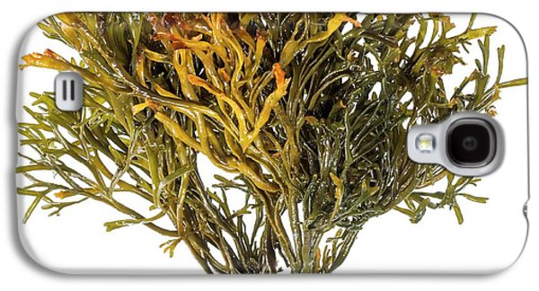 Channelled Wrack Seaweed Galaxy S4 Case