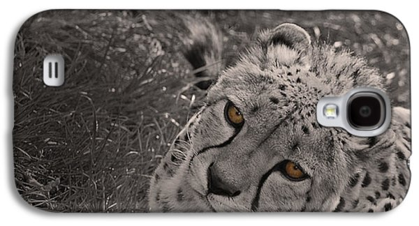 Cheetah Eyes Galaxy S4 Case by Martin Newman