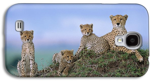 Cheetah Mother And Cubs Masai Mara Galaxy S4 Case by Yva Momatiuk John Eastcott