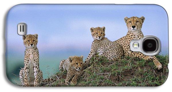Cheetah Mother And Cubs Masai Mara Galaxy S4 Case