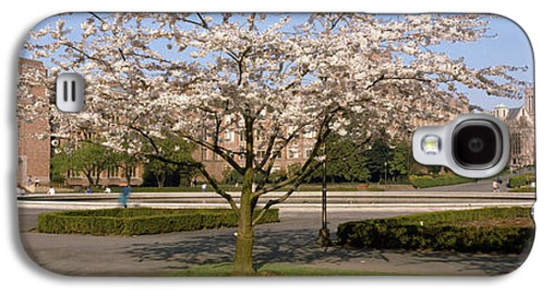 Cherry Blossom Trees In A University Galaxy S4 Case