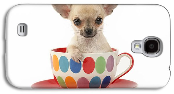 Chihuahua In Cup Dp684 Galaxy S4 Case by Greg Cuddiford
