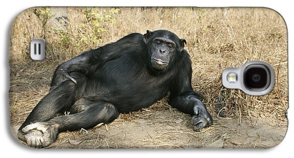 Chimpanzee Resting Galaxy S4 Case