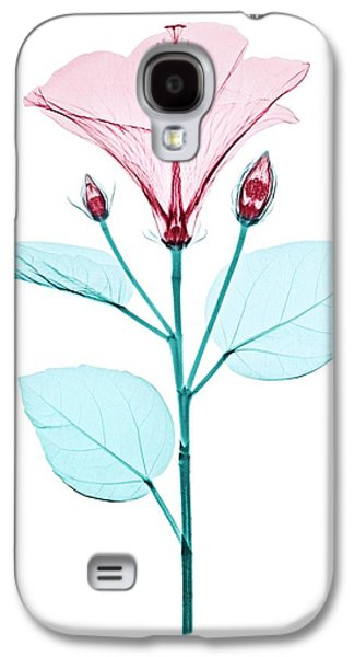 Chinese Hibiscus Flower Galaxy S4 Case by Brendan Fitzpatrick