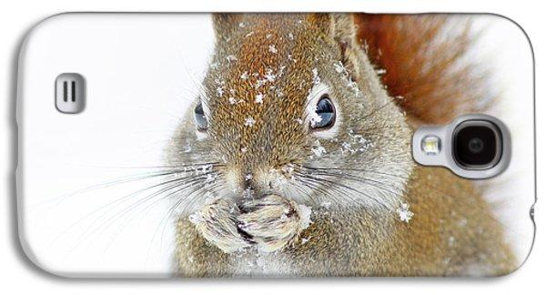 Christmas Squirrel Galaxy S4 Case