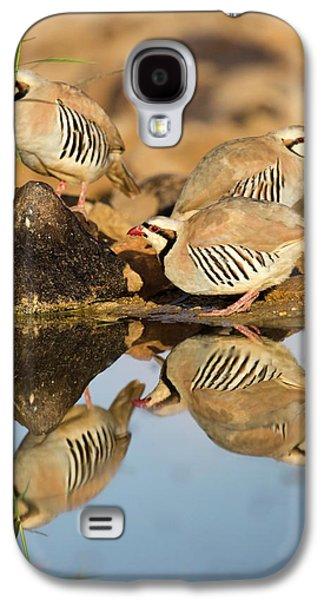 Chukar Partridge Alectoris Chukar Galaxy S4 Case