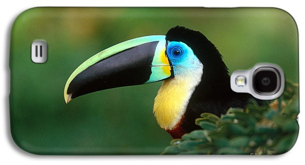 Citron-throated Toucan Galaxy S4 Case by Art Wolfe