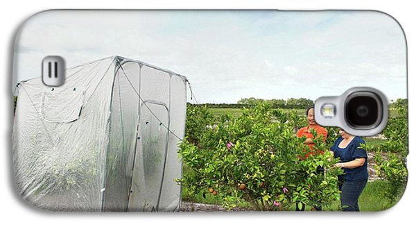 Citrus Greening Disease Treatment Galaxy S4 Case
