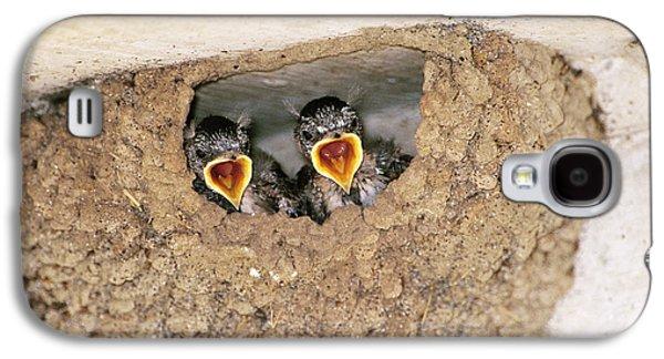 Cliff Swallow Chicks Galaxy S4 Case by Paul J. Fusco
