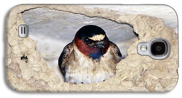 Cliff Swallow In Its Nest Galaxy S4 Case