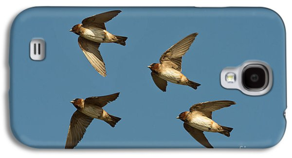 Cliff Swallows Flying Galaxy S4 Case by Anthony Mercieca