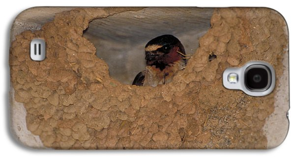 Cliff Swallows Galaxy S4 Case