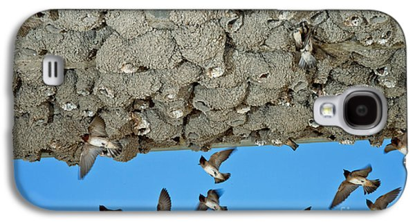 Cliff Swallows Returning To Nests Galaxy S4 Case by Anthony Mercieca