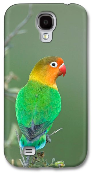 Lovebird Galaxy S4 Case - Close-up Of A Fischers Lovebird by Panoramic Images
