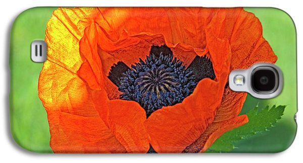 Close-up Of A Flowering Orange Poppy Galaxy S4 Case