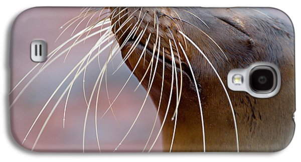 Close-up Of A Galapagos Sea Lion Galaxy S4 Case by Panoramic Images