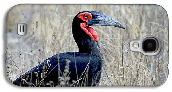 Close-up Of A Ground Hornbill, Kruger Galaxy S4 Case by Miva Stock