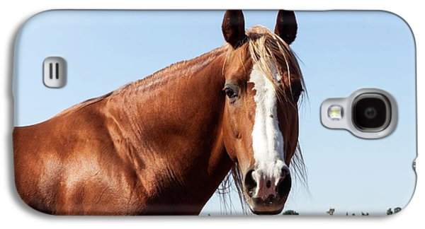 Close Up Of A Horse Galaxy S4 Case