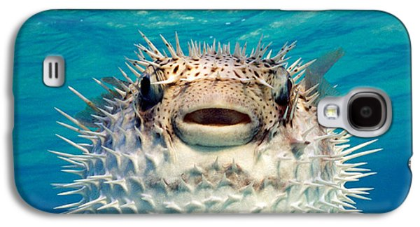 Close-up Of A Puffer Fish, Bahamas Galaxy S4 Case by Panoramic Images