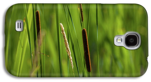 Close-up Of Cattails Plant In A Field Galaxy S4 Case