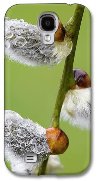 Close-up Of Rain Drops On Pussy Willows Galaxy S4 Case by Jaynes Gallery