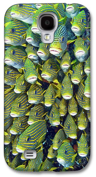 Close-up Of Schooling Sweetlip Fish Galaxy S4 Case by Jaynes Gallery