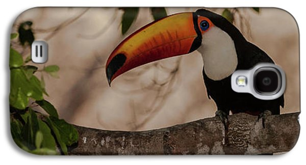 Close-up Of Tocu Toucan Ramphastos Toco Galaxy S4 Case by Panoramic Images