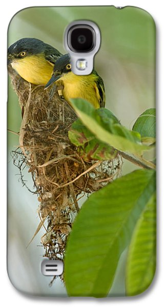 Flycatcher Galaxy S4 Case - Close-up Of Two Common Tody-flycatchers by Panoramic Images