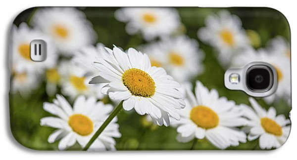 Close-up Of White Daisy Flowers Galaxy S4 Case