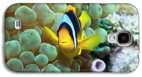 Clownfish In Anemone Galaxy S4 Case by Georgette Douwma