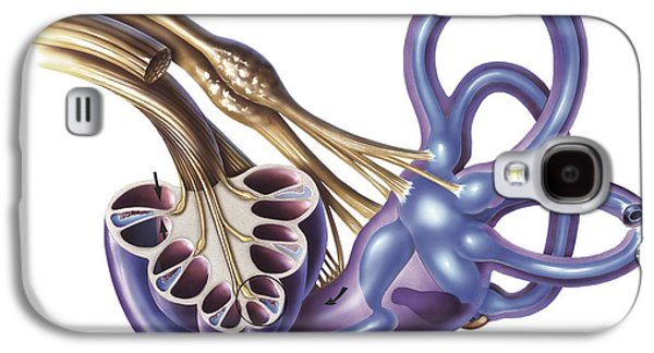 Cochlea Detail With Vestibulocochlear Galaxy S4 Case by TriFocal Communications