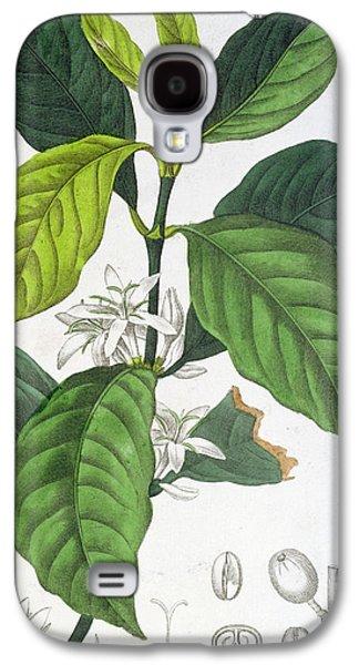 Coffea Arabica Galaxy S4 Case by Pancrace Bessa