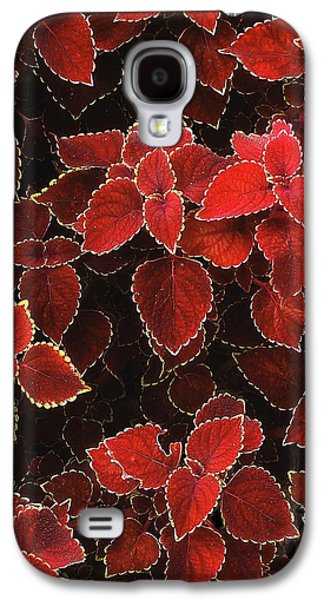 Coleus Galaxy S4 Case by Jessica Jenney