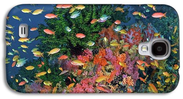 Colorful Reef Scenic, Triton Bay, Fak Galaxy S4 Case by Jaynes Gallery
