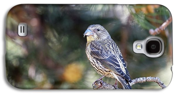 Crossbill Galaxy S4 Case - Common Crossbill Juvenile by Dr P. Marazzi