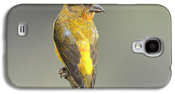 Crossbill Galaxy S4 Case - Common Crossbill Loxia Curvirostra by Rhz