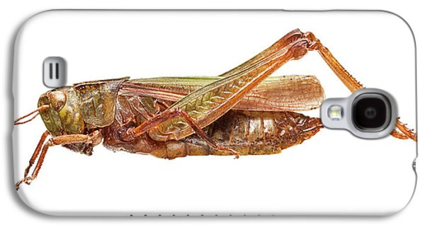 Grasshopper Galaxy S4 Case - Common Green Grasshopper by Natural History Museum, London
