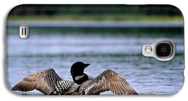 Common Loon Galaxy S4 Case by Mark Newman