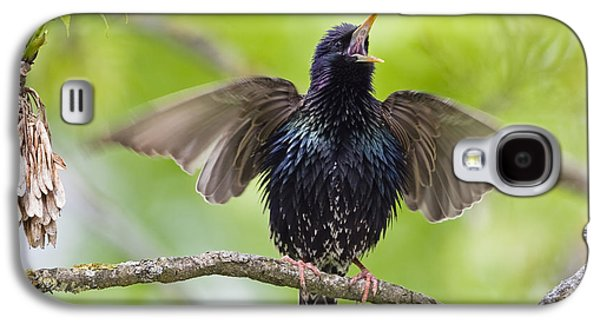 Common Starling Singing Bavaria Galaxy S4 Case by Konrad Wothe