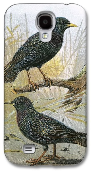 Common Starling Top And Intermediate Starling Bottom Galaxy S4 Case