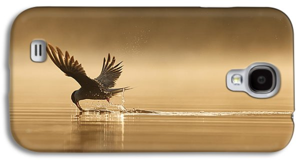 Common Tern Fishing Zuid-holland Galaxy S4 Case by Zenno Bloemendal