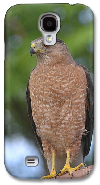Cooper's Hawk I Galaxy S4 Case by Suzette Kallen