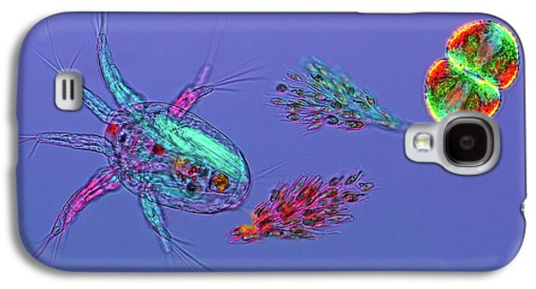 Copepod And Algae Galaxy S4 Case